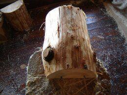 Choosing the log for raccoon wood carving