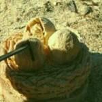 Dinosaur Egg Carving