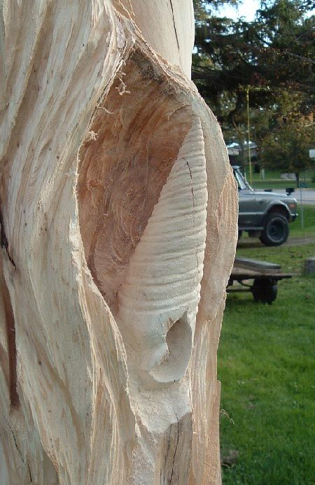 Smoothing out the hollow behind the shell