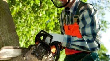 wear chainsaw safety gear